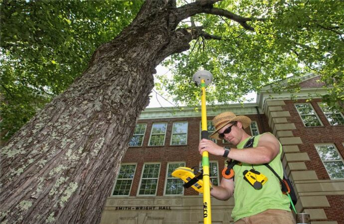Arborist Consultations-Lemon Grove CA Tree Trimming and Stump Grinding Services-We Offer Tree Trimming Services, Tree Removal, Tree Pruning, Tree Cutting, Residential and Commercial Tree Trimming Services, Storm Damage, Emergency Tree Removal, Land Clearing, Tree Companies, Tree Care Service, Stump Grinding, and we're the Best Tree Trimming Company Near You Guaranteed!