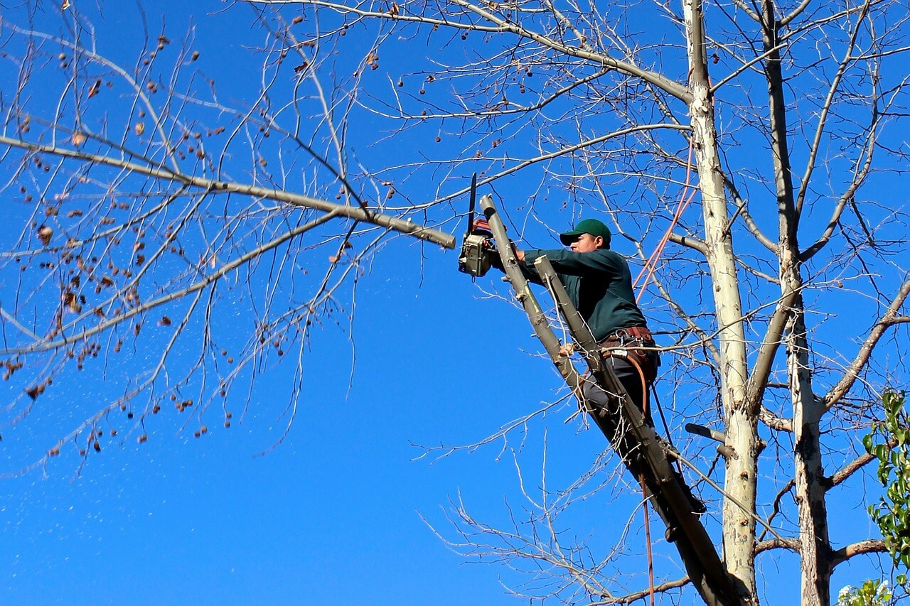 Contact Us-Lemon Grove CA Tree Trimming and Stump Grinding Services-We Offer Tree Trimming Services, Tree Removal, Tree Pruning, Tree Cutting, Residential and Commercial Tree Trimming Services, Storm Damage, Emergency Tree Removal, Land Clearing, Tree Companies, Tree Care Service, Stump Grinding, and we're the Best Tree Trimming Company Near You Guaranteed!