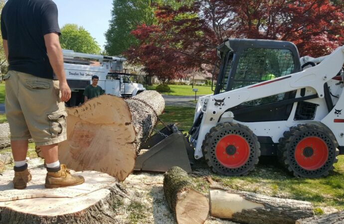 La Presa-Lemon Grove CA Tree Trimming and Stump Grinding Services-We Offer Tree Trimming Services, Tree Removal, Tree Pruning, Tree Cutting, Residential and Commercial Tree Trimming Services, Storm Damage, Emergency Tree Removal, Land Clearing, Tree Companies, Tree Care Service, Stump Grinding, and we're the Best Tree Trimming Company Near You Guaranteed!