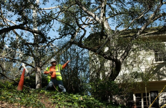 Oak Park-Lemon Grove CA Tree Trimming and Stump Grinding Services-We Offer Tree Trimming Services, Tree Removal, Tree Pruning, Tree Cutting, Residential and Commercial Tree Trimming Services, Storm Damage, Emergency Tree Removal, Land Clearing, Tree Companies, Tree Care Service, Stump Grinding, and we're the Best Tree Trimming Company Near You Guaranteed!