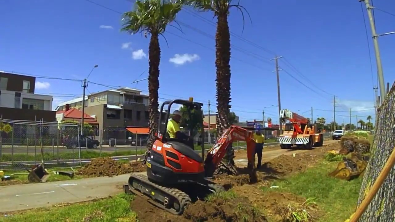 Palm Tree Removal-Lemon Grove CA Tree Trimming and Stump Grinding Services-We Offer Tree Trimming Services, Tree Removal, Tree Pruning, Tree Cutting, Residential and Commercial Tree Trimming Services, Storm Damage, Emergency Tree Removal, Land Clearing, Tree Companies, Tree Care Service, Stump Grinding, and we're the Best Tree Trimming Company Near You Guaranteed!