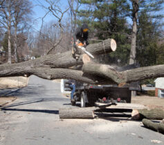 Residential Tree Services-Lemon Grove CA Tree Trimming and Stump Grinding Services-We Offer Tree Trimming Services, Tree Removal, Tree Pruning, Tree Cutting, Residential and Commercial Tree Trimming Services, Storm Damage, Emergency Tree Removal, Land Clearing, Tree Companies, Tree Care Service, Stump Grinding, and we're the Best Tree Trimming Company Near You Guaranteed!