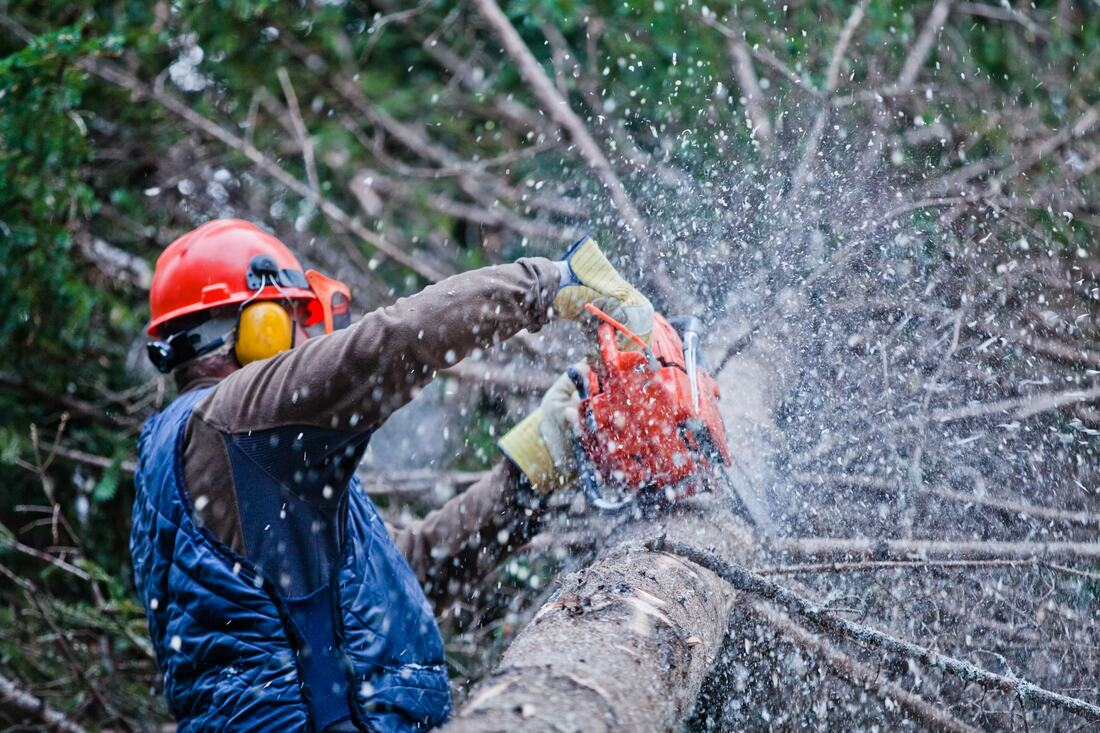 Rolando-Lemon Grove CA Tree Trimming and Stump Grinding Services-We Offer Tree Trimming Services, Tree Removal, Tree Pruning, Tree Cutting, Residential and Commercial Tree Trimming Services, Storm Damage, Emergency Tree Removal, Land Clearing, Tree Companies, Tree Care Service, Stump Grinding, and we're the Best Tree Trimming Company Near You Guaranteed!