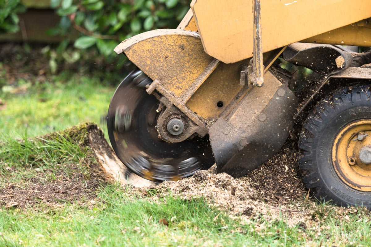 Stump Grinding-Lemon Grove CA Tree Trimming and Stump Grinding Services-We Offer Tree Trimming Services, Tree Removal, Tree Pruning, Tree Cutting, Residential and Commercial Tree Trimming Services, Storm Damage, Emergency Tree Removal, Land Clearing, Tree Companies, Tree Care Service, Stump Grinding, and we're the Best Tree Trimming Company Near You Guaranteed!