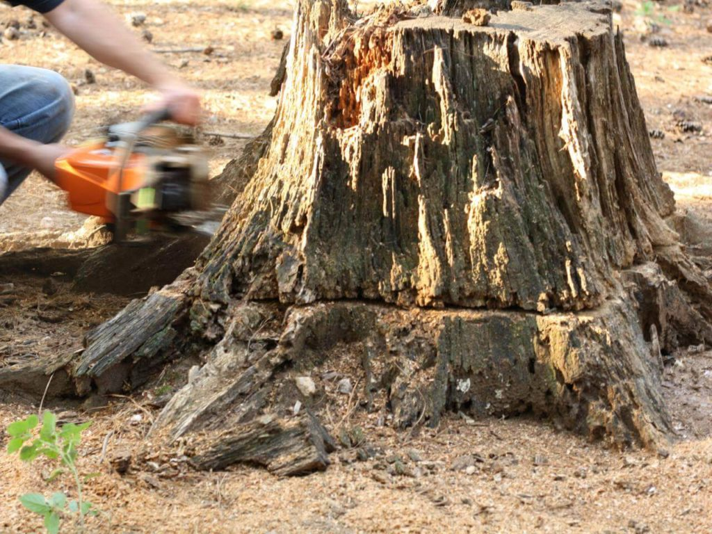 Stump Removal-Lemon Grove CA Tree Trimming and Stump Grinding Services-We Offer Tree Trimming Services, Tree Removal, Tree Pruning, Tree Cutting, Residential and Commercial Tree Trimming Services, Storm Damage, Emergency Tree Removal, Land Clearing, Tree Companies, Tree Care Service, Stump Grinding, and we're the Best Tree Trimming Company Near You Guaranteed!