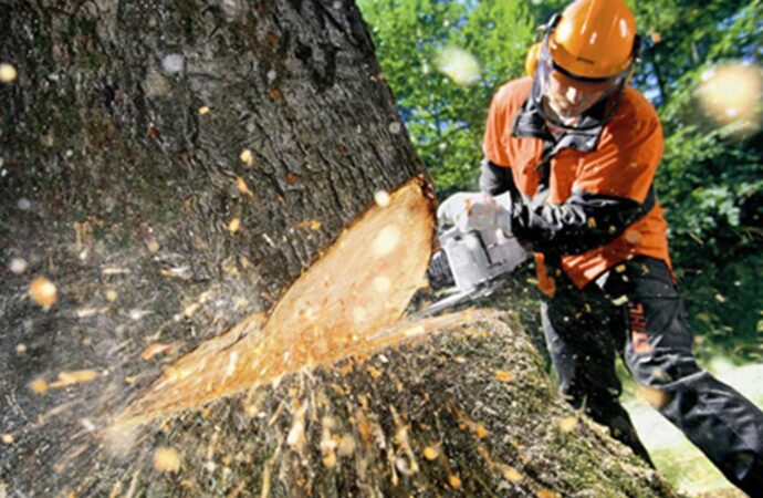 Tree Cutting-Lemon Grove CA Tree Trimming and Stump Grinding Services-We Offer Tree Trimming Services, Tree Removal, Tree Pruning, Tree Cutting, Residential and Commercial Tree Trimming Services, Storm Damage, Emergency Tree Removal, Land Clearing, Tree Companies, Tree Care Service, Stump Grinding, and we're the Best Tree Trimming Company Near You Guaranteed!