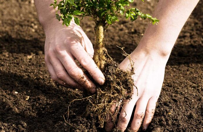 Tree Planting-Lemon Grove CA Tree Trimming and Stump Grinding Services-We Offer Tree Trimming Services, Tree Removal, Tree Pruning, Tree Cutting, Residential and Commercial Tree Trimming Services, Storm Damage, Emergency Tree Removal, Land Clearing, Tree Companies, Tree Care Service, Stump Grinding, and we're the Best Tree Trimming Company Near You Guaranteed!