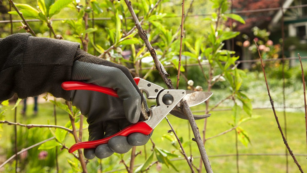 Tree Pruning-Lemon Grove CA Tree Trimming and Stump Grinding Services-We Offer Tree Trimming Services, Tree Removal, Tree Pruning, Tree Cutting, Residential and Commercial Tree Trimming Services, Storm Damage, Emergency Tree Removal, Land Clearing, Tree Companies, Tree Care Service, Stump Grinding, and we're the Best Tree Trimming Company Near You Guaranteed!
