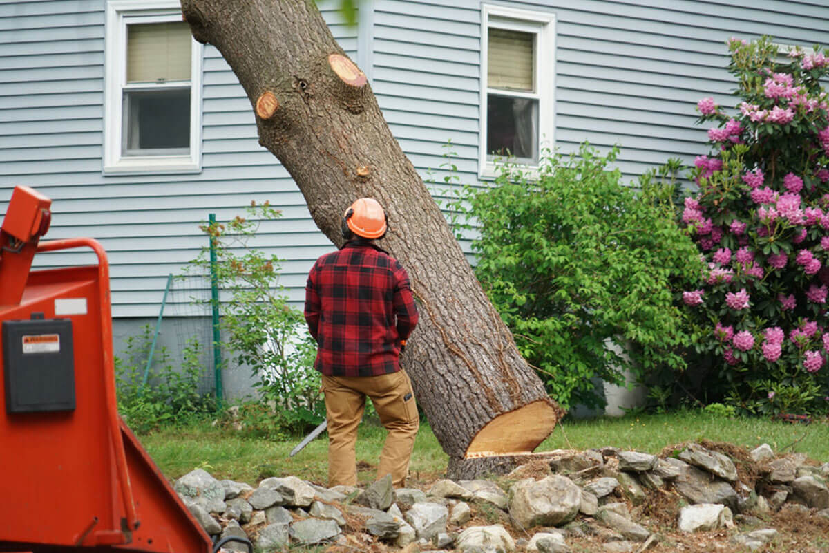 Tree Removal-Lemon Grove CA Tree Trimming and Stump Grinding Services-We Offer Tree Trimming Services, Tree Removal, Tree Pruning, Tree Cutting, Residential and Commercial Tree Trimming Services, Storm Damage, Emergency Tree Removal, Land Clearing, Tree Companies, Tree Care Service, Stump Grinding, and we're the Best Tree Trimming Company Near You Guaranteed!
